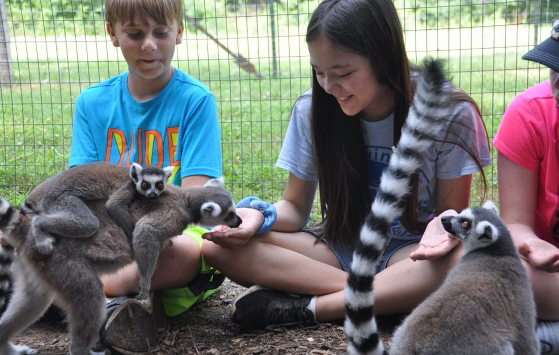 young boy and girl at Cub Creek Science Camp with a Ringtail Lemur
