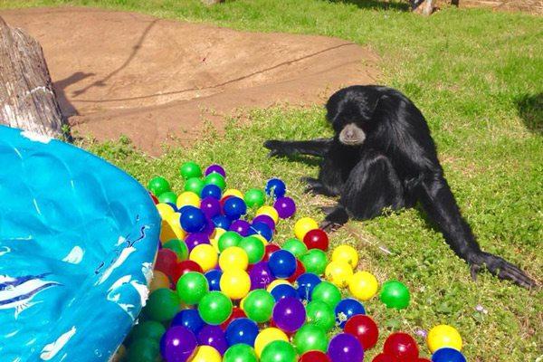 Dickerson Park Zoo Kids Fair