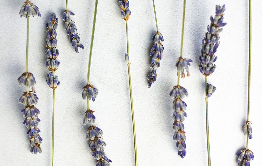 Lavender Recipes