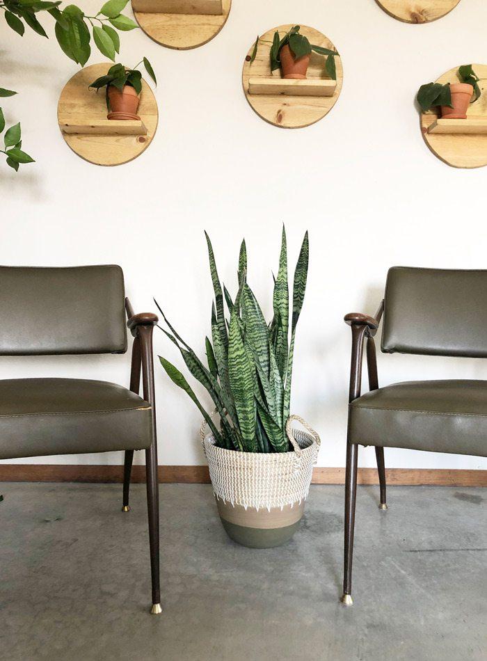 Indoor plants at Lightbox.