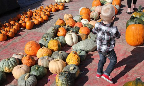 Pumpkins on display at fall festival