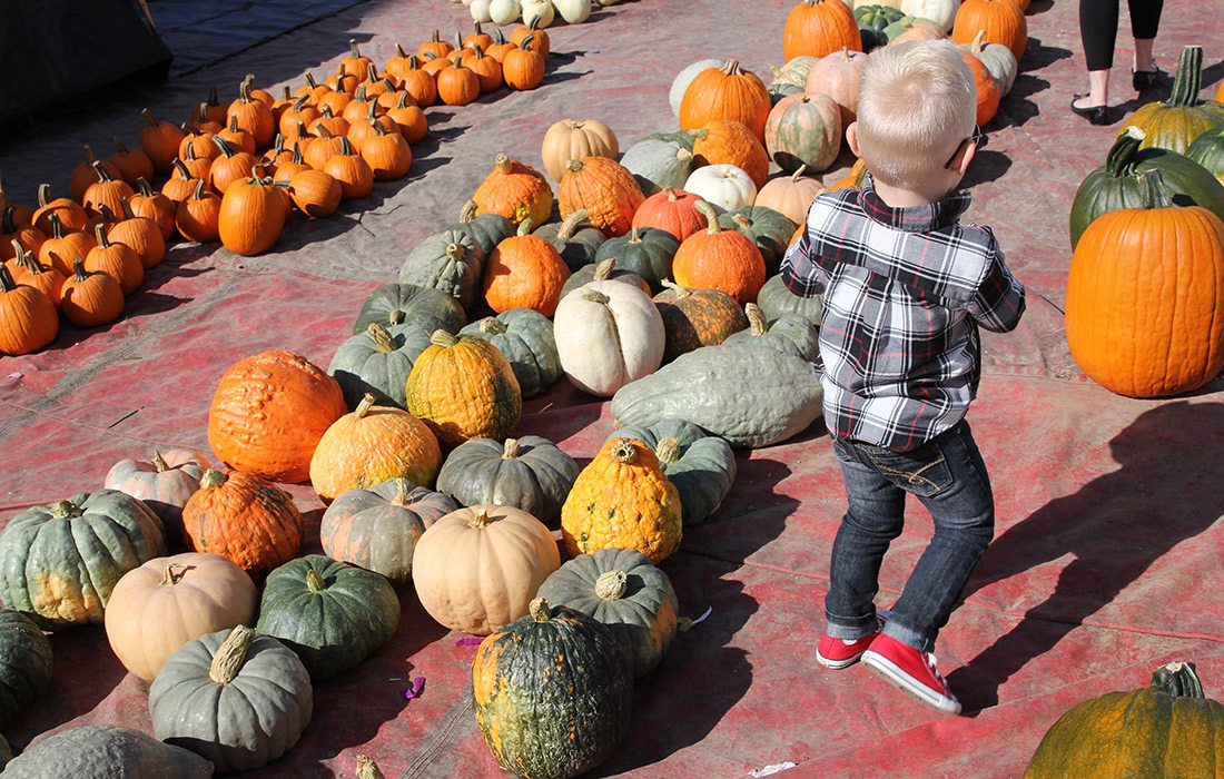 Pumpkins on display in fall