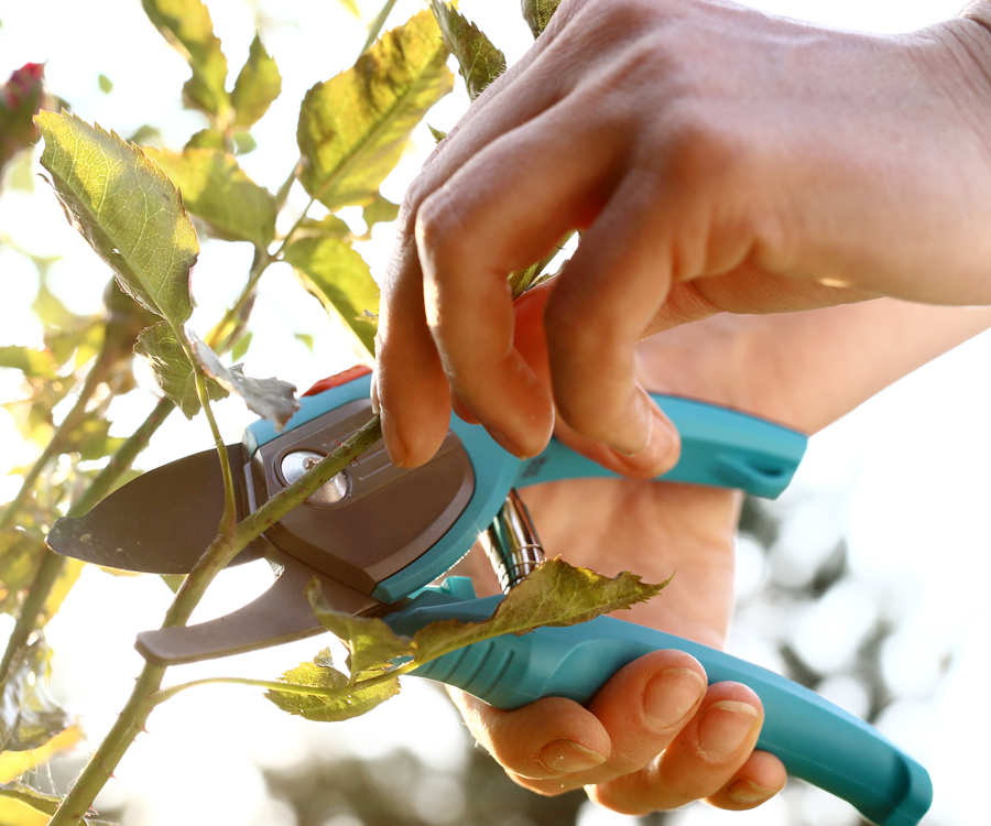 Trimming and pruning helps maintain your plants' longevity.