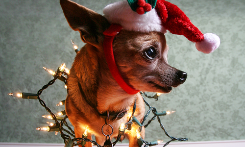 dog with santa hat and christmas lights