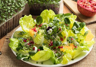 Healthy green and microgreens on a plate.