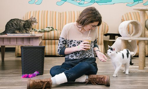 Woman playing with adoptable cats at Mochas & Meows in Branson MO