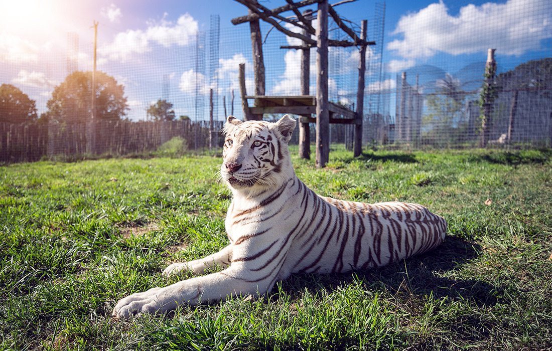 National Tiger Sanctuary in Missouri