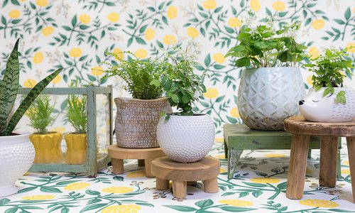 Bring Life to Your Space With Spring Plants