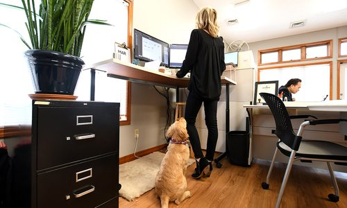 Meet Southwest Missouri's Cutest Office Pets