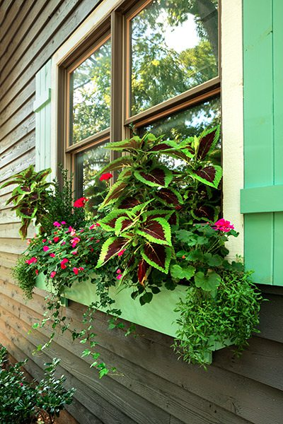 Shade loving plants in a window box