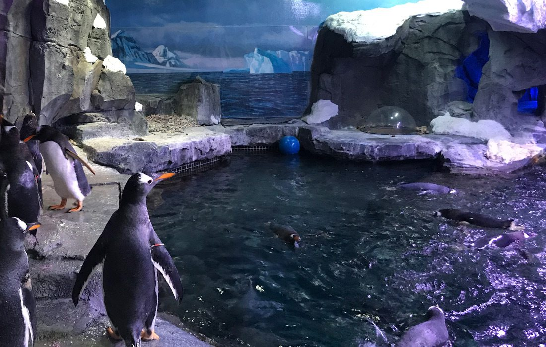 Interior penguin habitat at Wonders of Wildlife