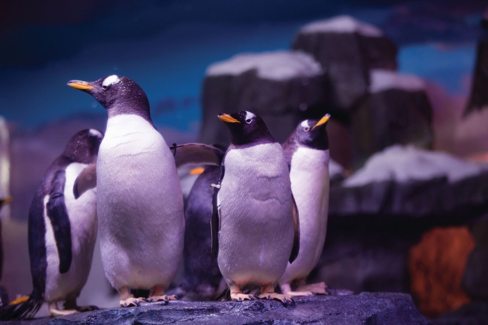 Learn about Penguins at Wonders of Wildlife