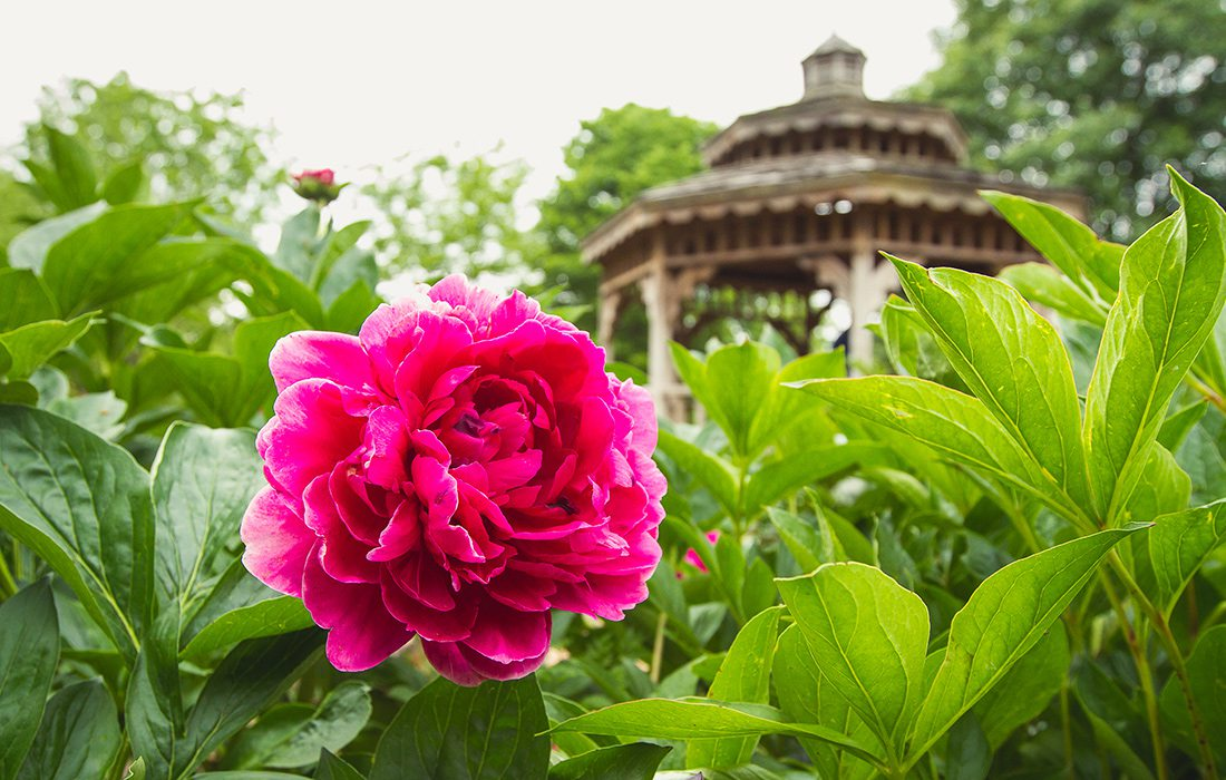 Spring at Springfield Botanical Gardens
