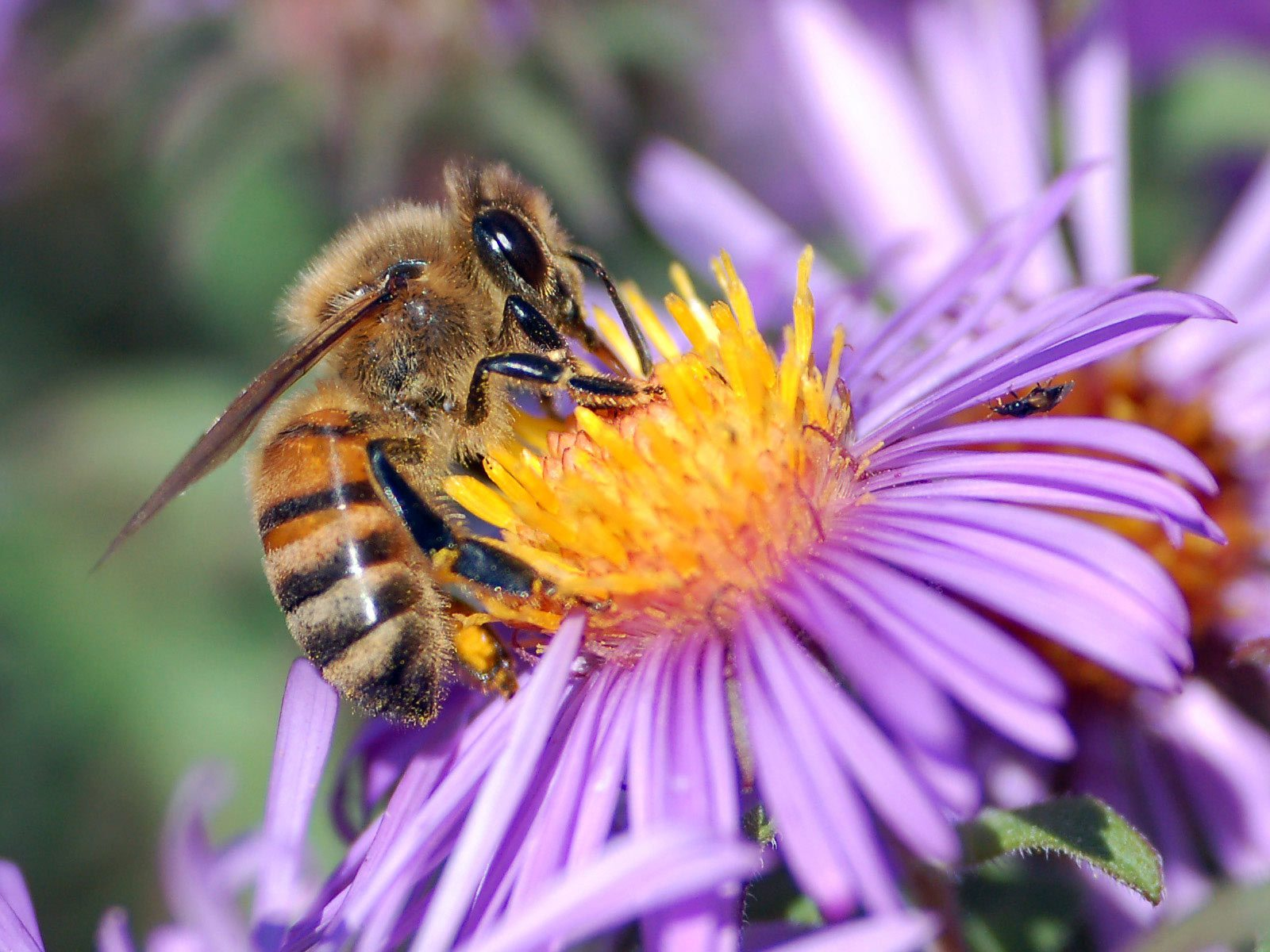Bee sitting on flower