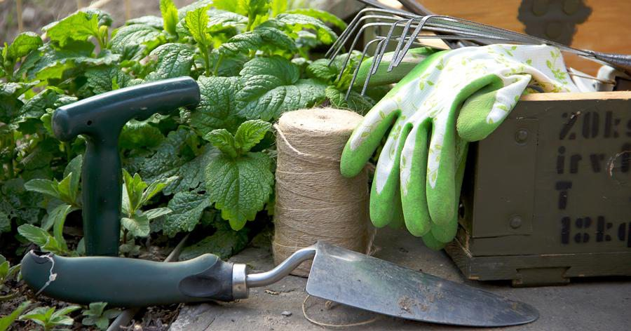 Vegetable Gardening Class in Springfield MO