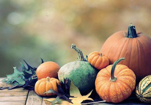 Pumpkin still life