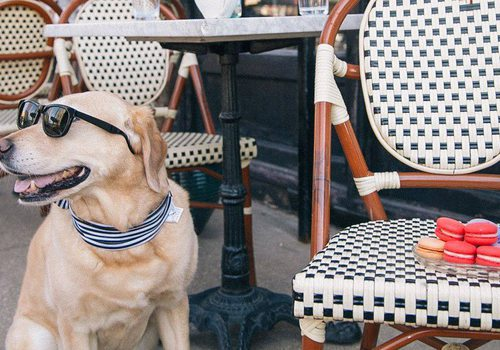 Take your dog to Queen City Wine Dive's patio.