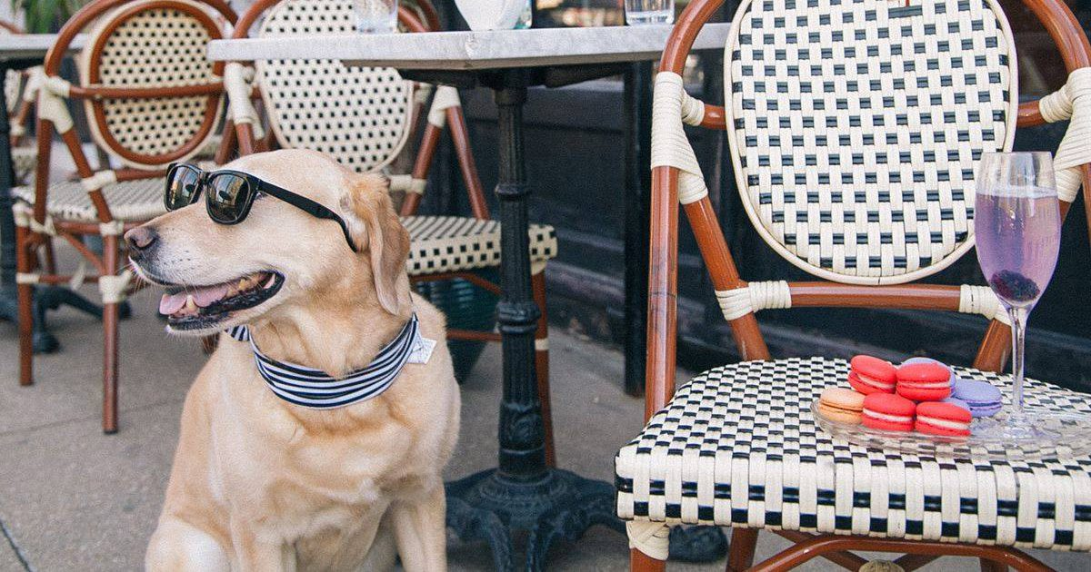 Take your dog to Queen City Wine Dive for Yappy Hour