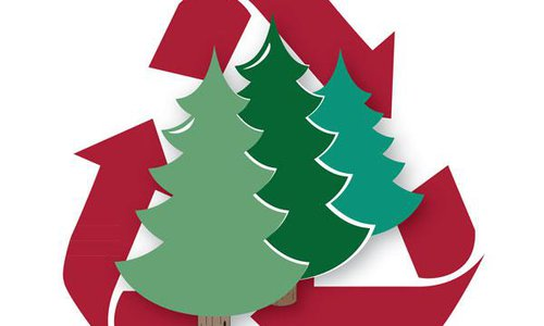 Recycle Your Tree 2014