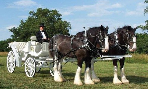 Horse drawn carriage for hire in Springfield MO