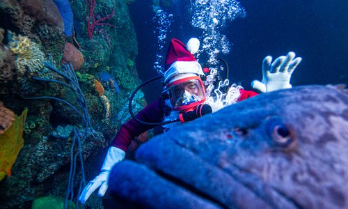 Santa scuba dives at Wonders of Wildlife in Springfield MO