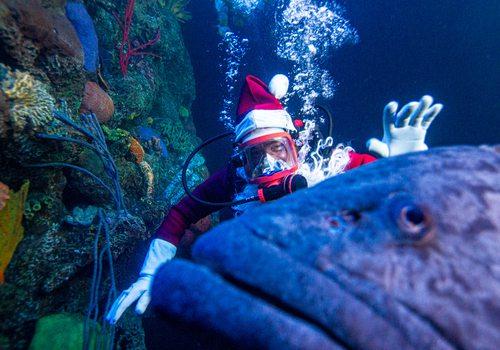 Santa scuba dives at Wonders of Wildlife in Springfield MO
