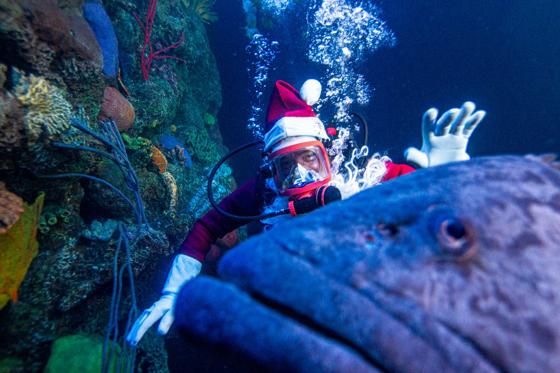 Scuba Claus at Wonders of Wildlife Springfield MO