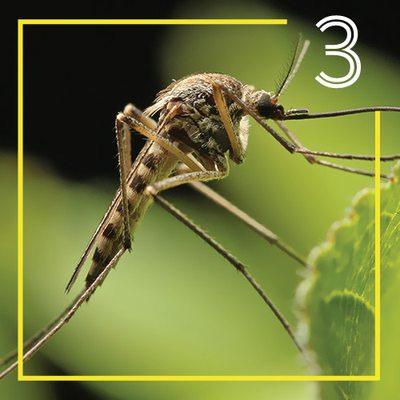 Mosquito, Flea & Tick Control from Mosquito Joe of SW Missouri
