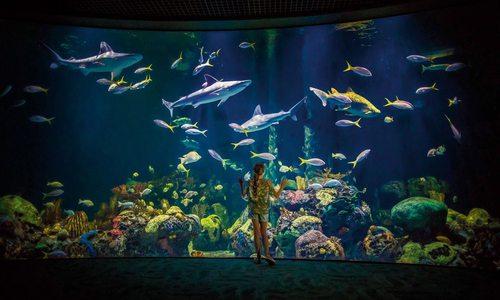 Shark tank at Wonders of Wildlife