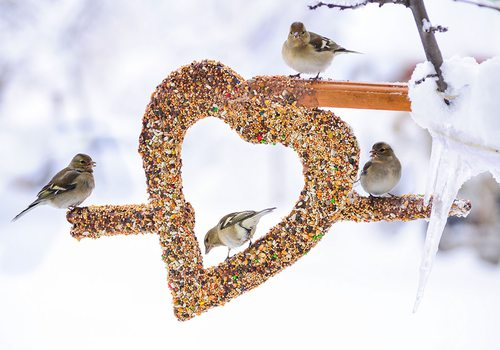 small birds eating bird seed in the winter from a heart shaped bird feeder