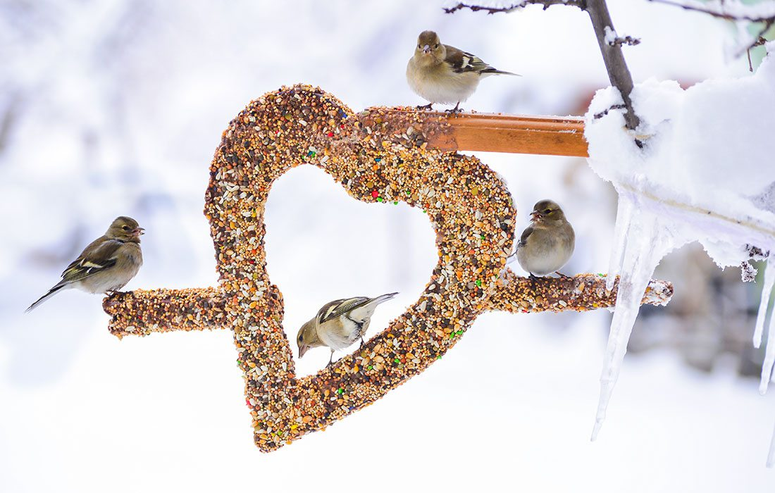 birds at bird feeder in the snow