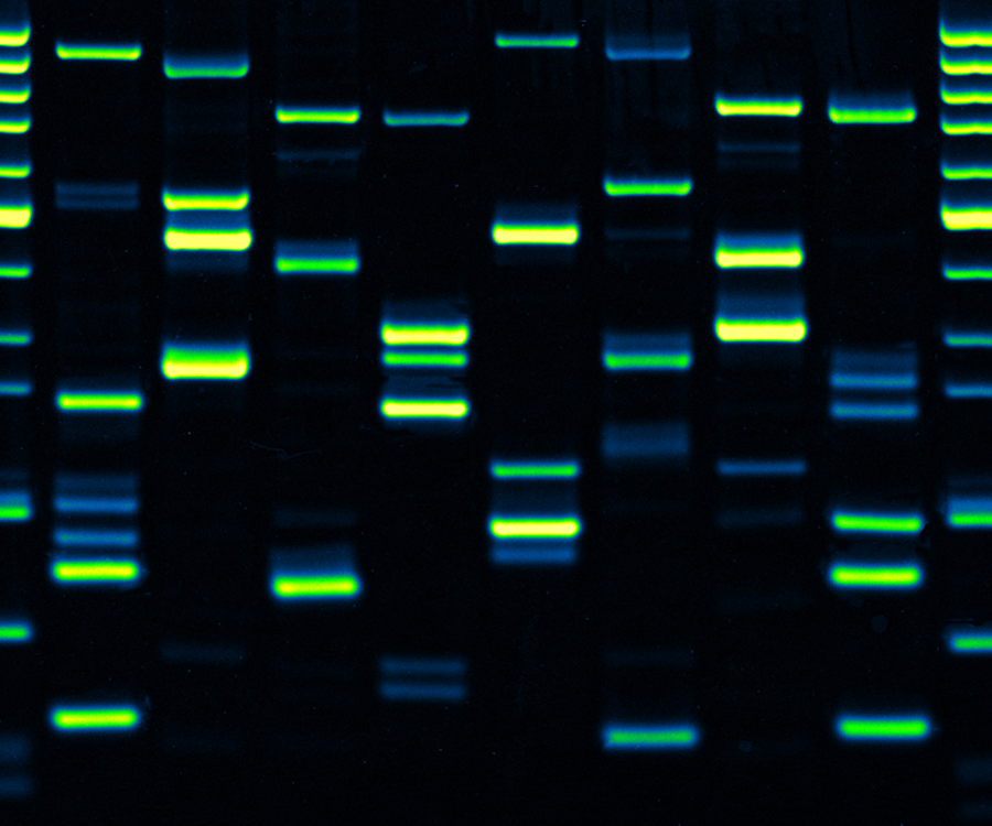 The Art of Dynamic DNA