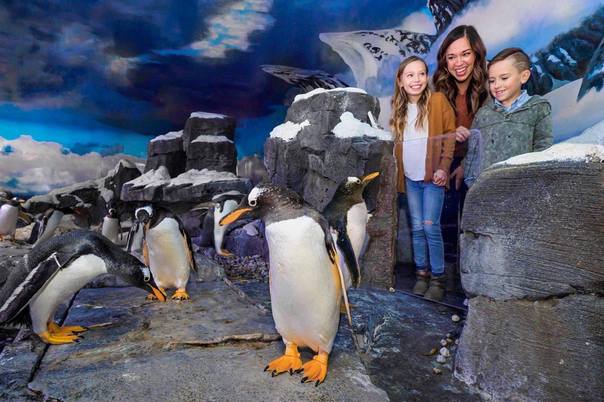Penguin encounter at Wonders of Wildlife