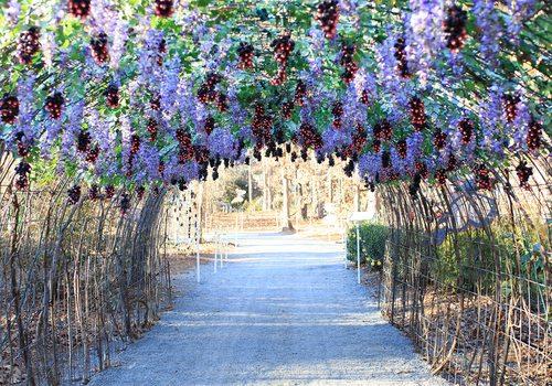 Garvan Woodland Gardens in Hot Springs, AR