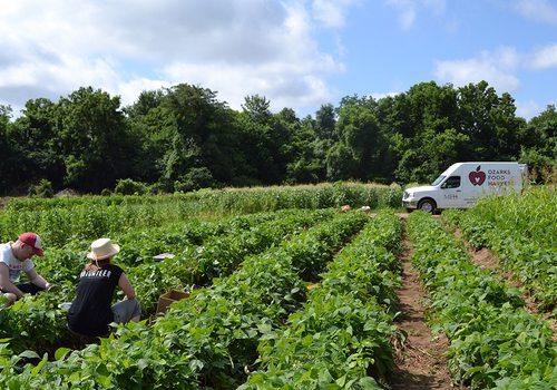 Volunteers pick food for Ozark Food Harvest