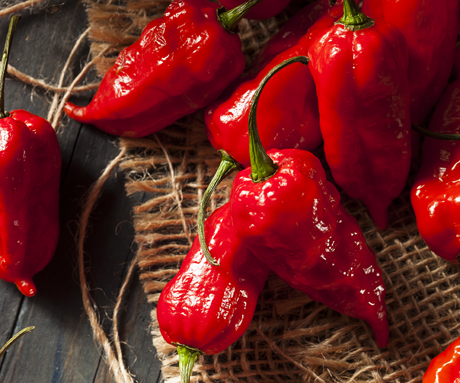 The World's Hottest Peppers are Grown in Strafford