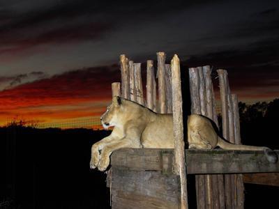 National Tiger Sanctuary near Springfield, MO