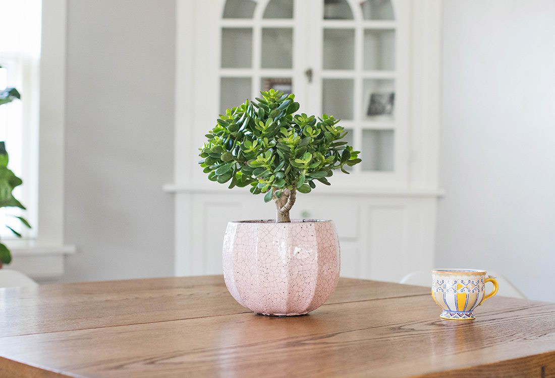 Trend to Try - Plant in Pink Pot - By Janae Hardy