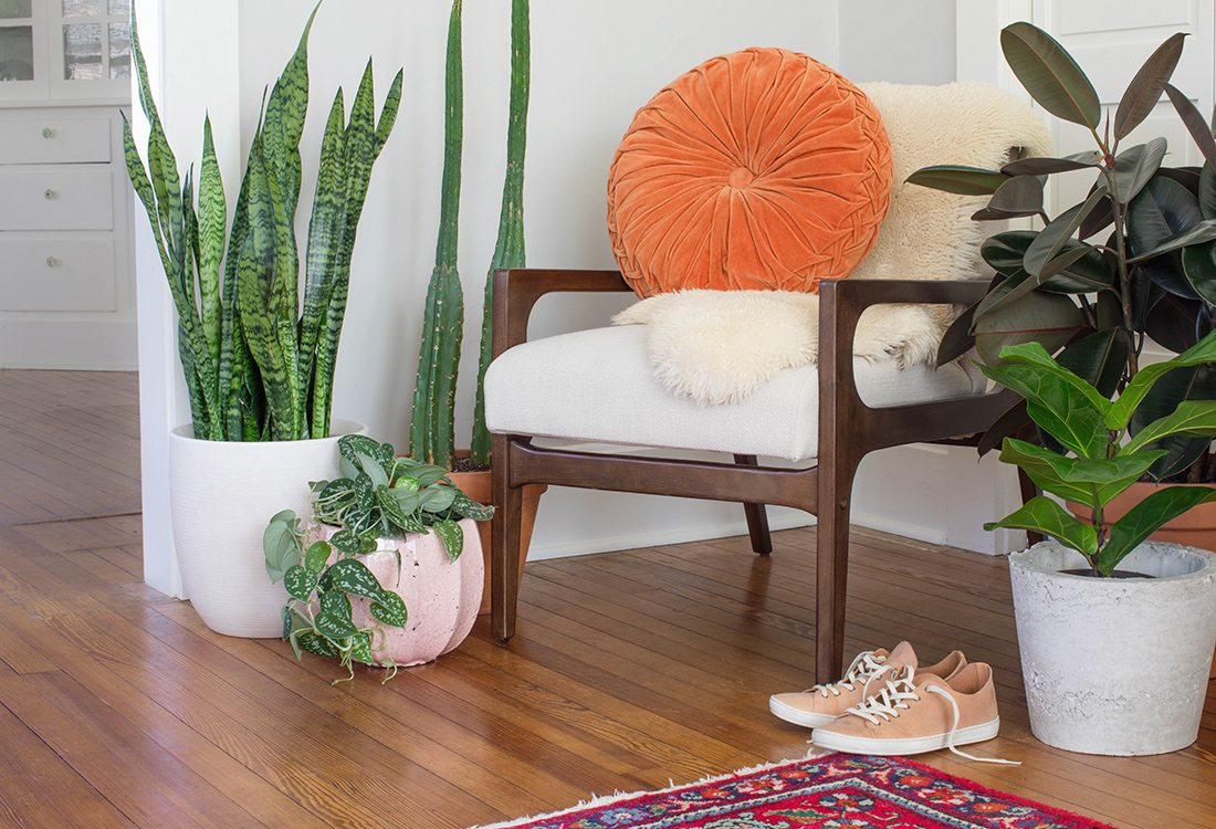 Trend to Try - Fill Your Room With Plants - By Janae Hardy