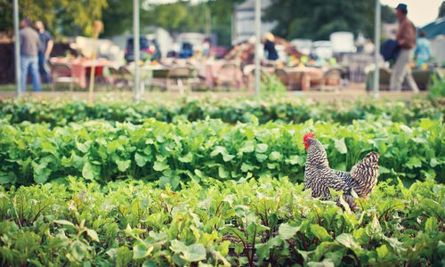 Urban Roots Farm's Farm-to-Table Dinners