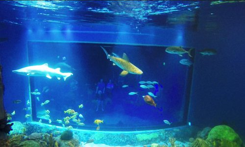 Swim with Sharks at Wonders of Wildlife