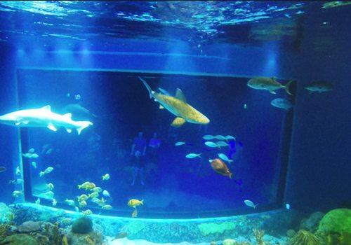 Swim with Sharks at Wonders of Wildlife