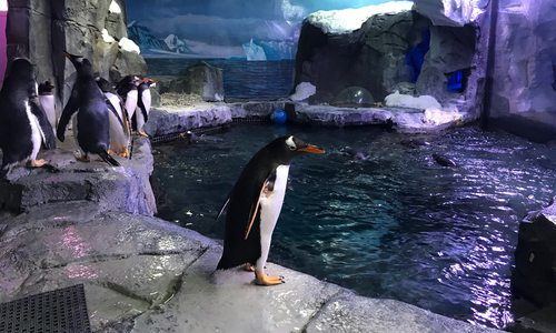Penguin Encounter at Wonders of Wildlife in Springfield MO