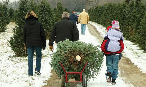 Where to Cut Your Own Christmas Tree in 417-Land 2015
