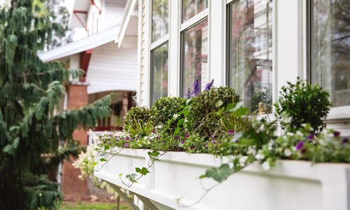 a window box garden