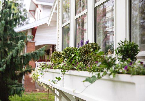 a window box garden