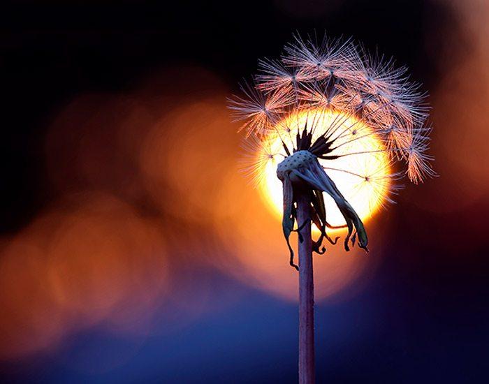 Wishful Sunset by Brandon Alms