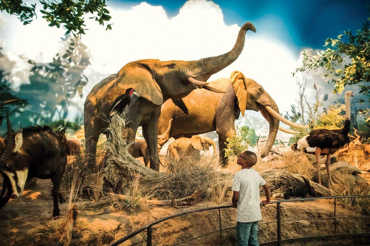 Wonders of Wildlife big game gallery