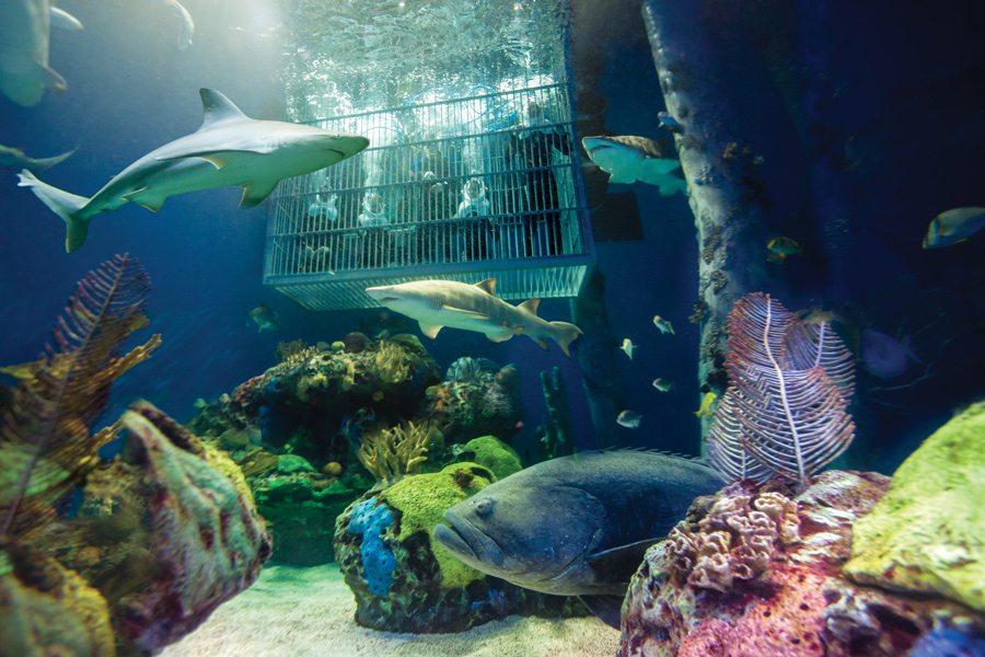 Shark dive at Wonders of Wildlife