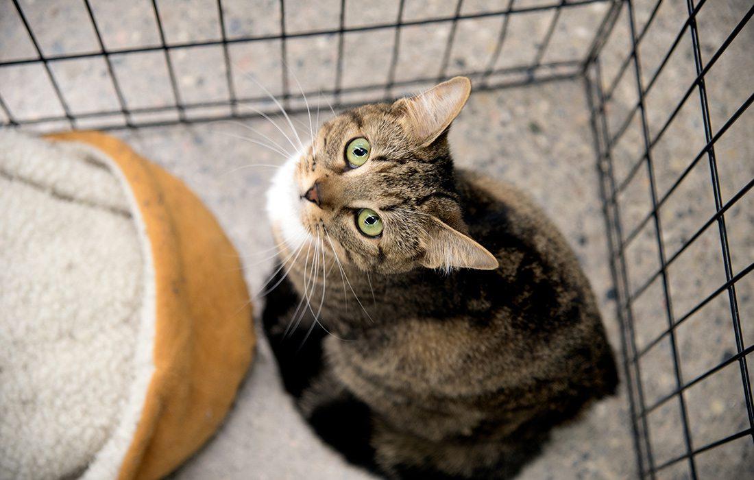 Kitten Adoption Event near Springfield, MO